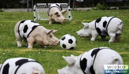 wm-soccer-pig1[1]