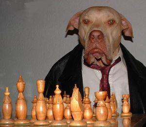 300px-Cane_che_gioca_a_scacchi[1]