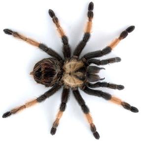 Gli insetti e i ragni malefici il moderatore ha rotto il - Immagini del ragno da stampare ...